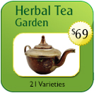 Herbal Tea Seeds | Non-Hybrid Open Pollinated & Heirloom Tea Seeds